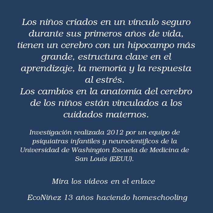 Apego   Econiñez